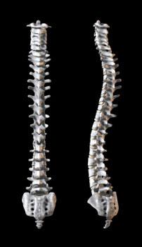 Boise Chiropractic Help